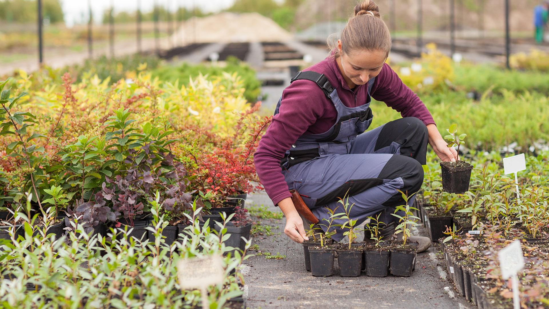 Yrkeshögskoleutbildning till trädgårdsmästare